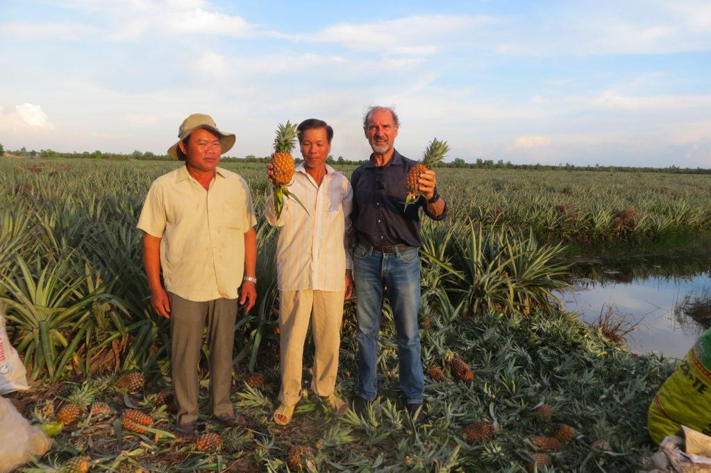 Les vergers du Mekong, champs d'ananas
