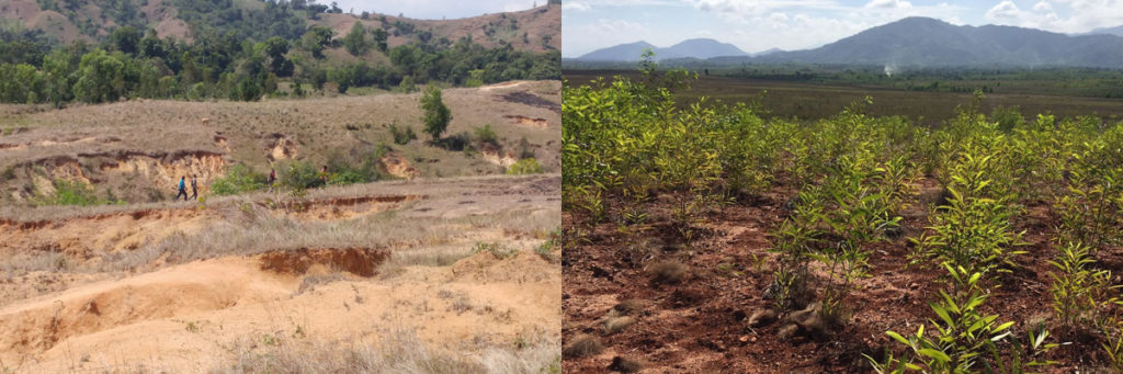 Terres dégradées en Haïti avant - après